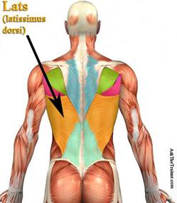 best back exercise chart